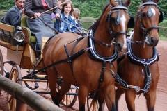 Ponyspiele 2012